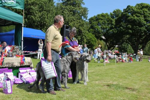 Farnleigh - Irish Wolfhound 2013 06 09 (18)