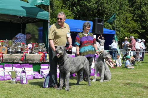 Farnleigh - Irish Wolfhound 2013 06 09 (21)
