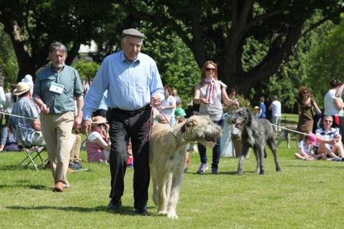 Farnleigh - Irish Wolfhound 2013 06 09 (22)
