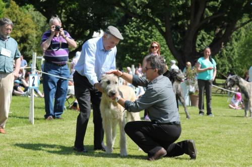 Farnleigh - Irish Wolfhound 2013 06 09 (23)