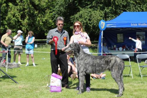 Farnleigh - Irish Wolfhound 2013 06 09 (26)