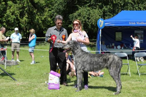 Farnleigh - Irish Wolfhound 2013 06 09 (27)