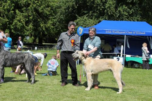 Farnleigh - Irish Wolfhound 2013 06 09 (28)