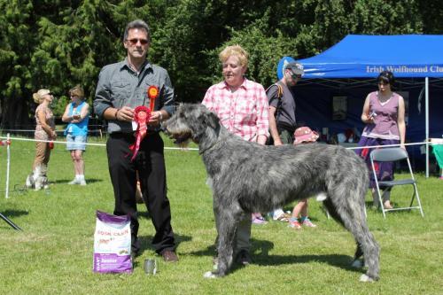 Farnleigh - Irish Wolfhound 2013 06 09 (34)