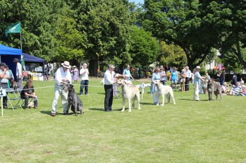 Farnleigh - Irish Wolfhound 2013 06 09 (37)