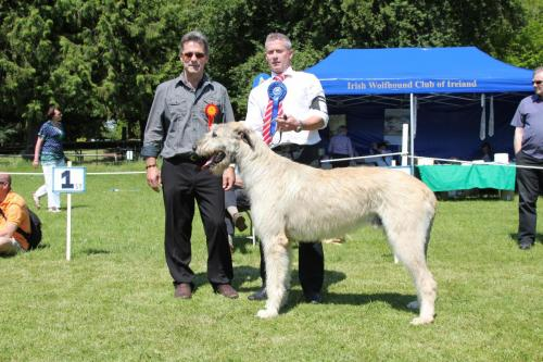 Farnleigh - Irish Wolfhound 2013 06 09 (39)