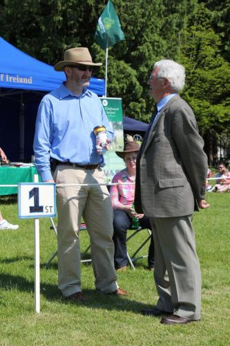 Farnleigh - Irish Wolfhound 2013 06 09 (4)