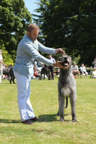 Farnleigh - Irish Wolfhound 2013 06 09 (40)