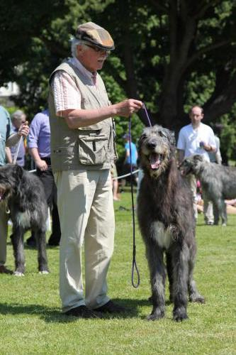 Farnleigh - Irish Wolfhound 2013 06 09 (45)
