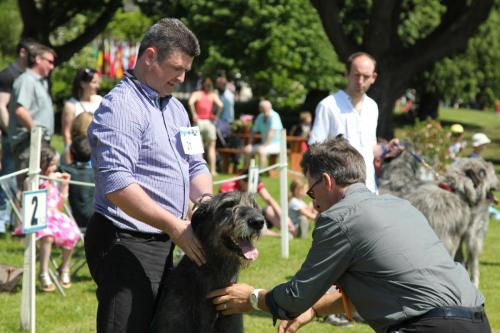 Farnleigh - Irish Wolfhound 2013 06 09 (46)