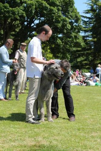 Farnleigh - Irish Wolfhound 2013 06 09 (47)
