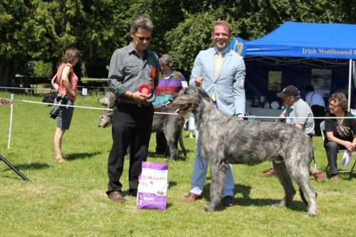 Farnleigh - Irish Wolfhound 2013 06 09 (49)