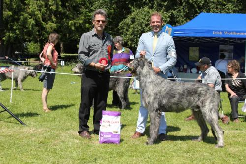 Farnleigh - Irish Wolfhound 2013 06 09 (50)