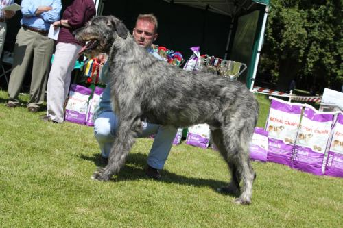 Farnleigh - Irish Wolfhound 2013 06 09 (53)