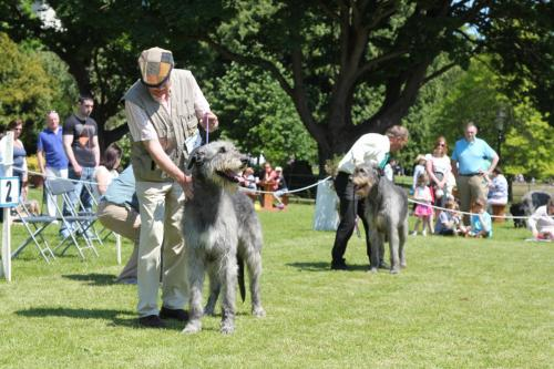 Farnleigh - Irish Wolfhound 2013 06 09 (58)