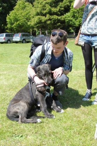Farnleigh - Irish Wolfhound 2013 06 09 (62)