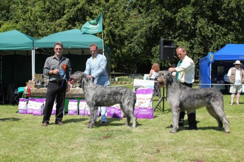 Farnleigh - Irish Wolfhound 2013 06 09 (64)
