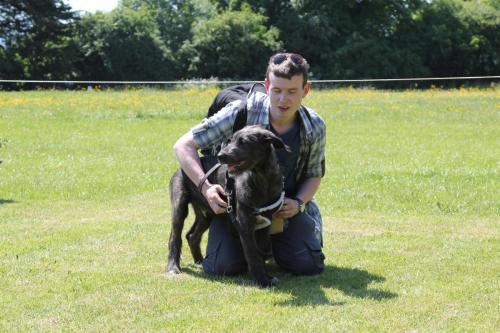 Farnleigh - Irish Wolfhound 2013 06 09 (66)