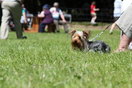 Farnleigh - Irish Wolfhound 2013 06 09 (78)