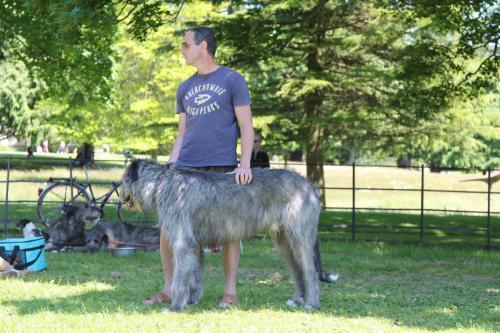 Farnleigh - Irish Wolfhound 2013 06 09 (79)