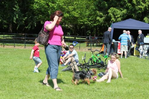 Farnleigh - Irish Wolfhound 2013 06 09 (8)