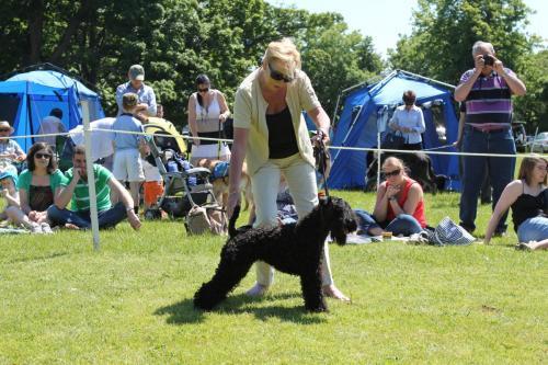 Farnleigh - Irish Wolfhound 2013 06 09 (80)