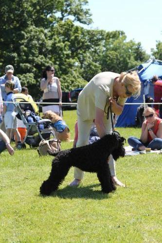 Farnleigh - Irish Wolfhound 2013 06 09 (81)