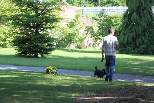 Farnleigh - Irish Wolfhound 2013 06 09 (1)