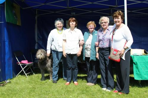 Farnleigh - Irish Wolfhound 2013 06 09 (11)