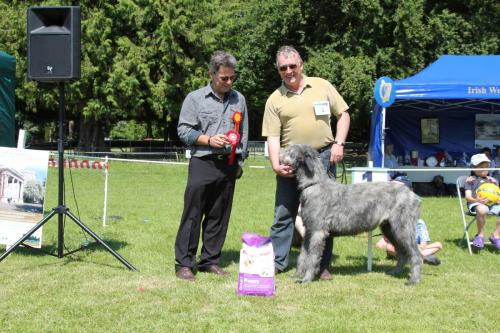 Farnleigh - Irish Wolfhound 2013 06 09 (13)