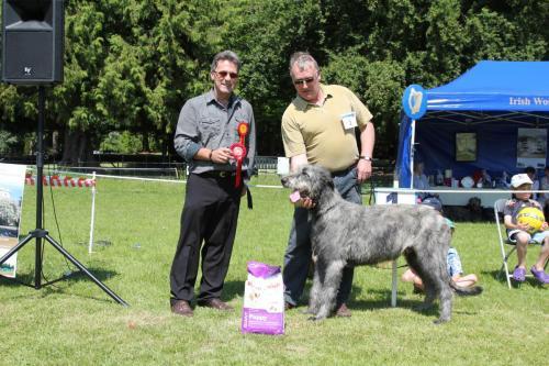 Farnleigh - Irish Wolfhound 2013 06 09 (14)