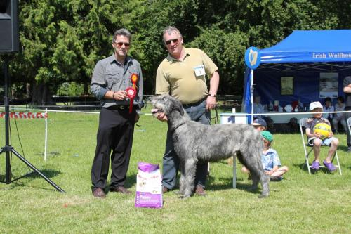 Farnleigh - Irish Wolfhound 2013 06 09 (15)