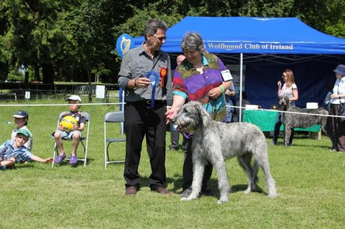 Farnleigh - Irish Wolfhound 2013 06 09 (16)