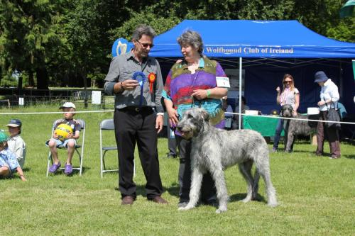 Farnleigh - Irish Wolfhound 2013 06 09 (17)