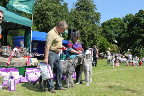 Farnleigh - Irish Wolfhound 2013 06 09 (19)