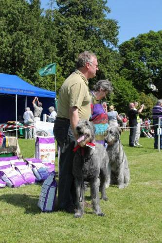 Farnleigh - Irish Wolfhound 2013 06 09 (20)