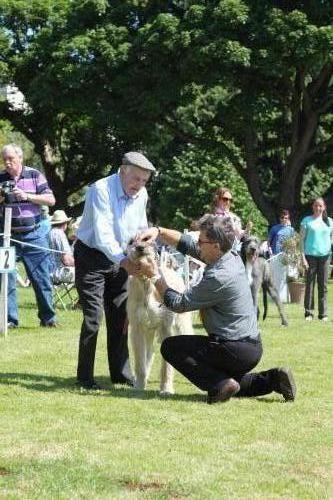 Farnleigh - Irish Wolfhound 2013 06 09 (24)
