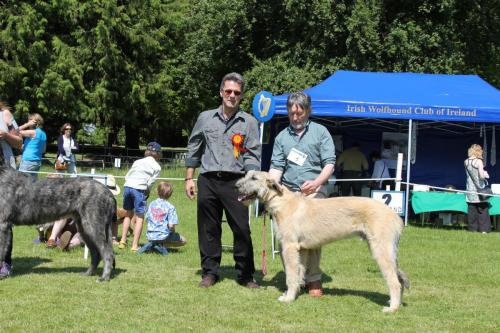 Farnleigh - Irish Wolfhound 2013 06 09 (29)