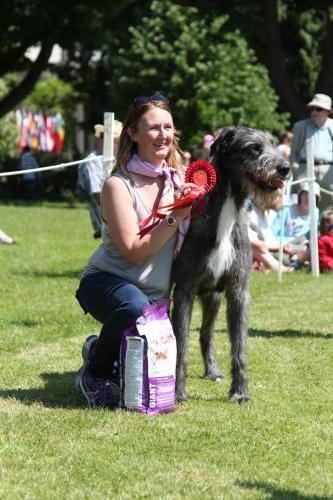 Farnleigh - Irish Wolfhound 2013 06 09 (30)