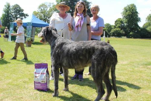 Farnleigh - Irish Wolfhound 2013 06 09 (31)