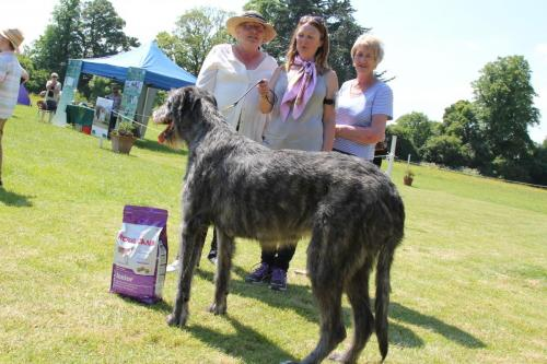 Farnleigh - Irish Wolfhound 2013 06 09 (32)