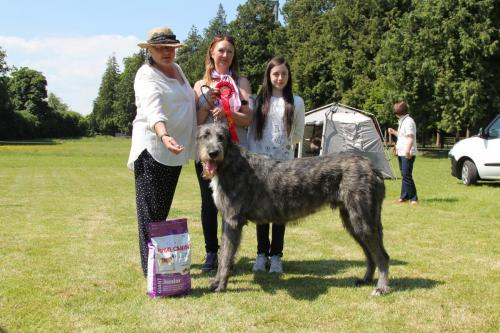 Farnleigh - Irish Wolfhound 2013 06 09 (33)