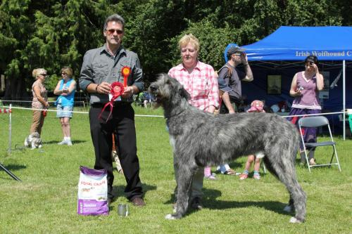 Farnleigh - Irish Wolfhound 2013 06 09 (35)