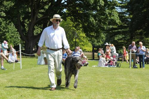 Farnleigh - Irish Wolfhound 2013 06 09 (36)