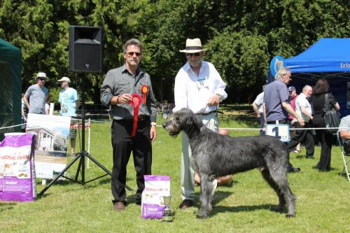 Farnleigh - Irish Wolfhound 2013 06 09 (38)