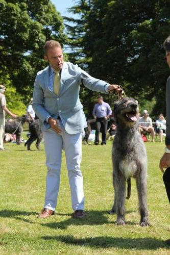 Farnleigh - Irish Wolfhound 2013 06 09 (41)