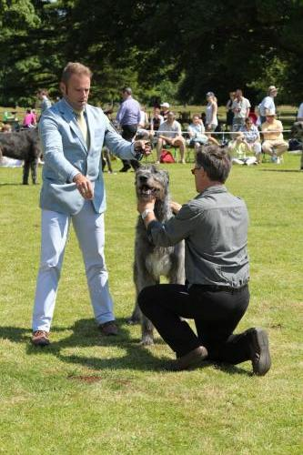 Farnleigh - Irish Wolfhound 2013 06 09 (42)