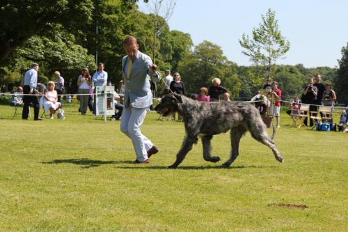 Farnleigh - Irish Wolfhound 2013 06 09 (43)