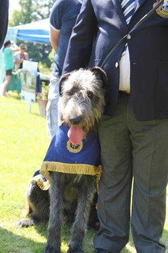 Farnleigh - Irish Wolfhound 2013 06 09 (5)