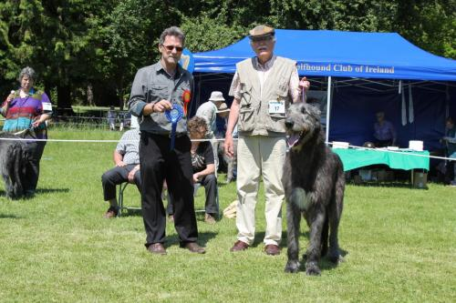 Farnleigh - Irish Wolfhound 2013 06 09 (51)